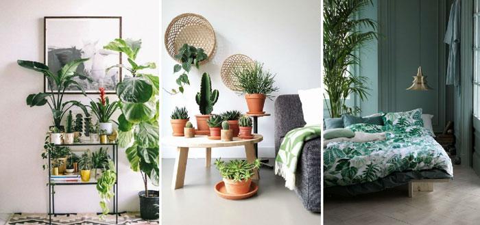 tendencia-urban-jungle-decoração